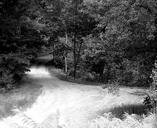Path #1: Go It Alone  Path #2: Find a trustworthy professional